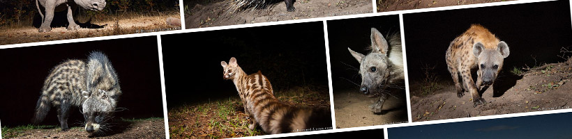 Learn Camera Trap Photography